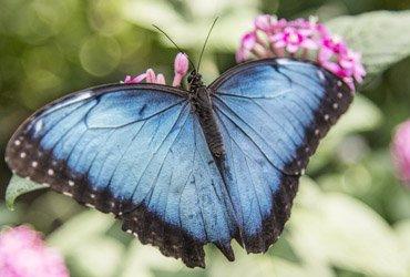 Aktivität: Schmetterlingspark